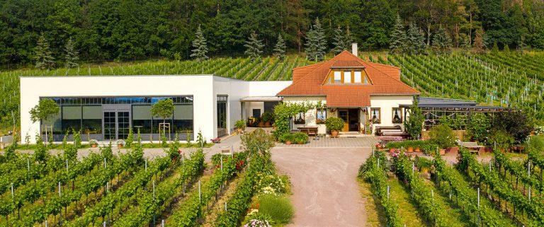 Weingut Matyas in Coswig